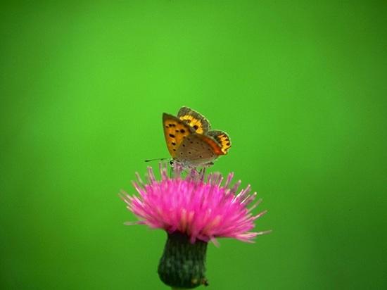 ルイアームストロングの蝶.jpg